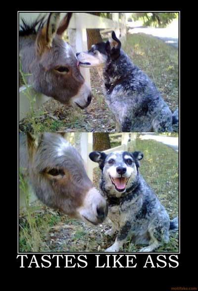 taste like donkey