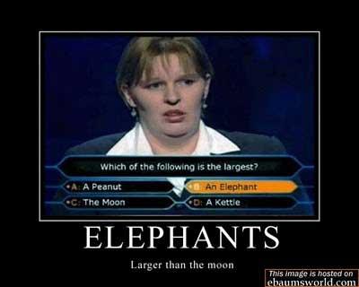 final answer elephant