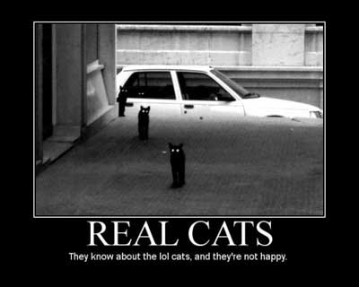 real cats lolcats