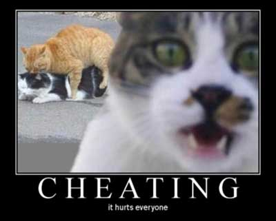 cheating hurts everyone cats