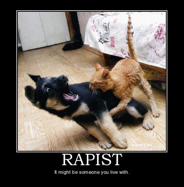 puppy kitten fight