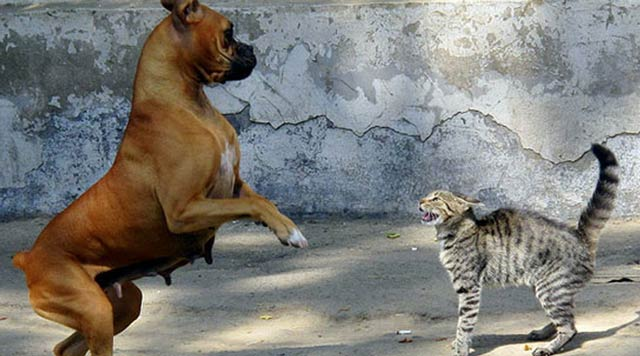 dogs scared of cats