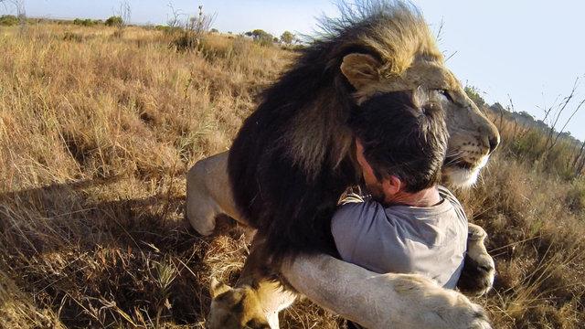gopro lion