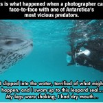 Photographer Versus Leopard Seal