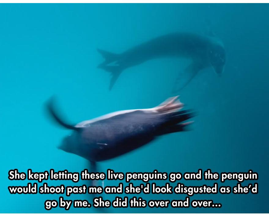 leopard-seal-5