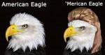Merican Eagle w/ Mullet