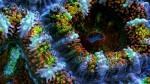 Slow Life Sea Anemones